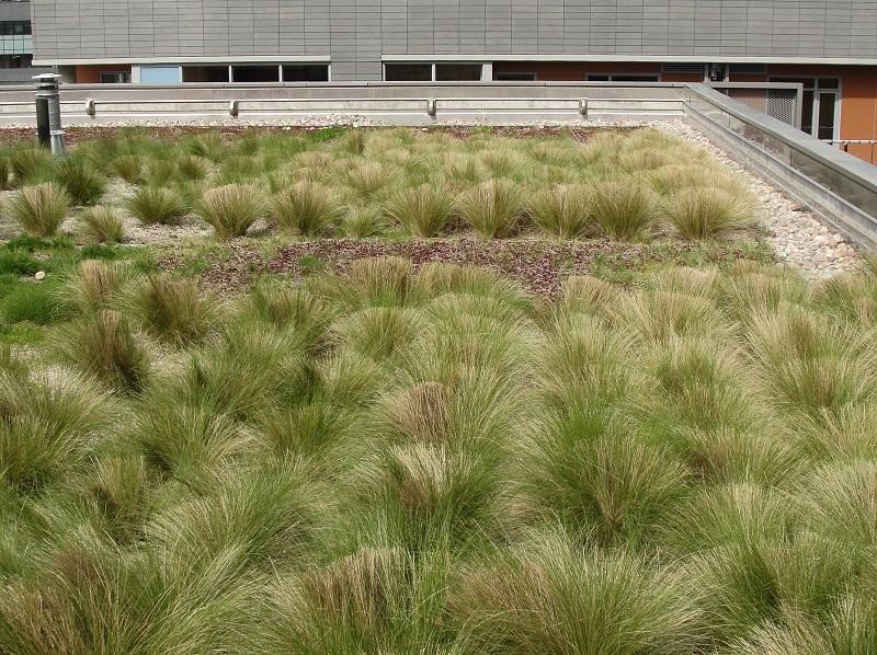 Dach pokryty roślinnością
